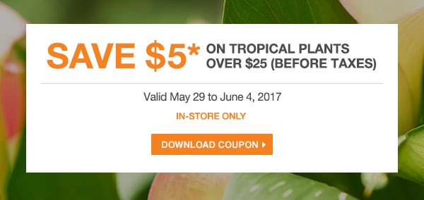 The Home Depot Save 5 Off Tropical Plants Over 25