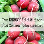 The Best Vegetables for Container Gardening