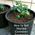 These are some tips I've learned that I'd love to share, to help you get started with container gardening!