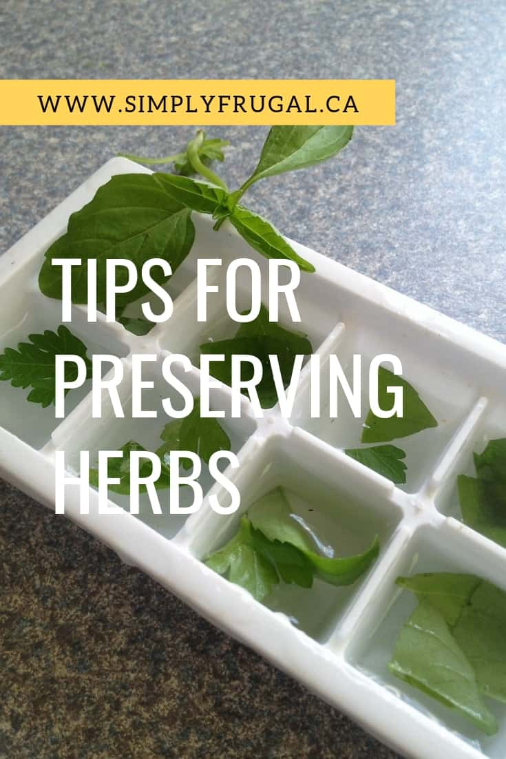 Take a look at some helpful ways to preserve your herbs and have them available to you all year long.