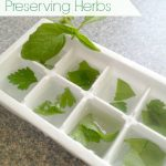 Tips for Preserving Herbs