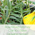 How Much Can You Save by Growing Your Own Herbs?
