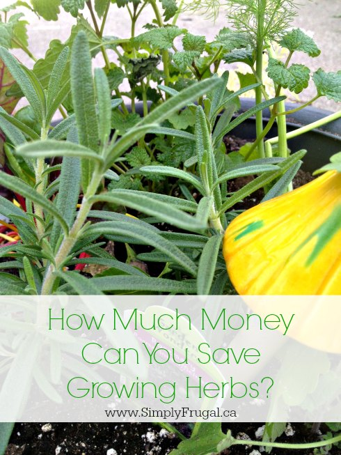 how much money can you save growing herbs