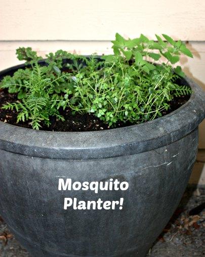 mosquito planter#1