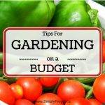 52 Ways To Save: Start a Garden on a Budget (Week 10)