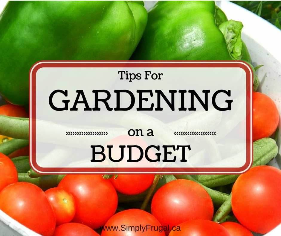 Tips For Gardening on a Budget