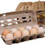 7 Creative Uses for Egg Cartons