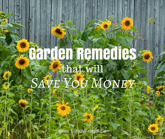Garden Remedies That Will Save You Money