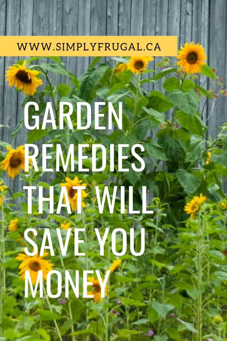Take a look at these 7 garden remediesthat will save you money, time, and will get you the best looking garden on the block.