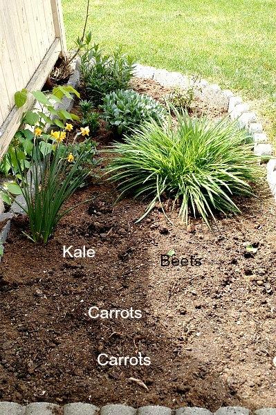 garden diagram 2015