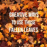 5 Creative Ways to Use Those Fallen Leaves