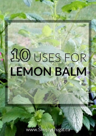 10 Uses for Lemon Balm