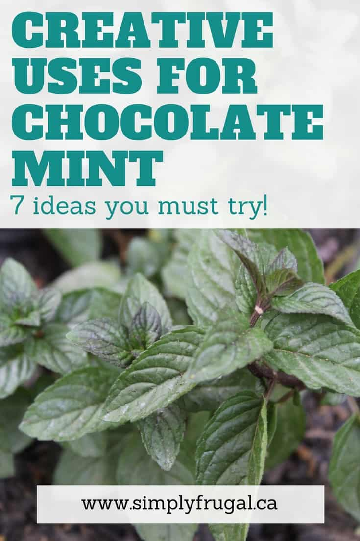 If you grow chocolate mint or are considering it, take a look at these creative uses for chocolate mint that you must try!