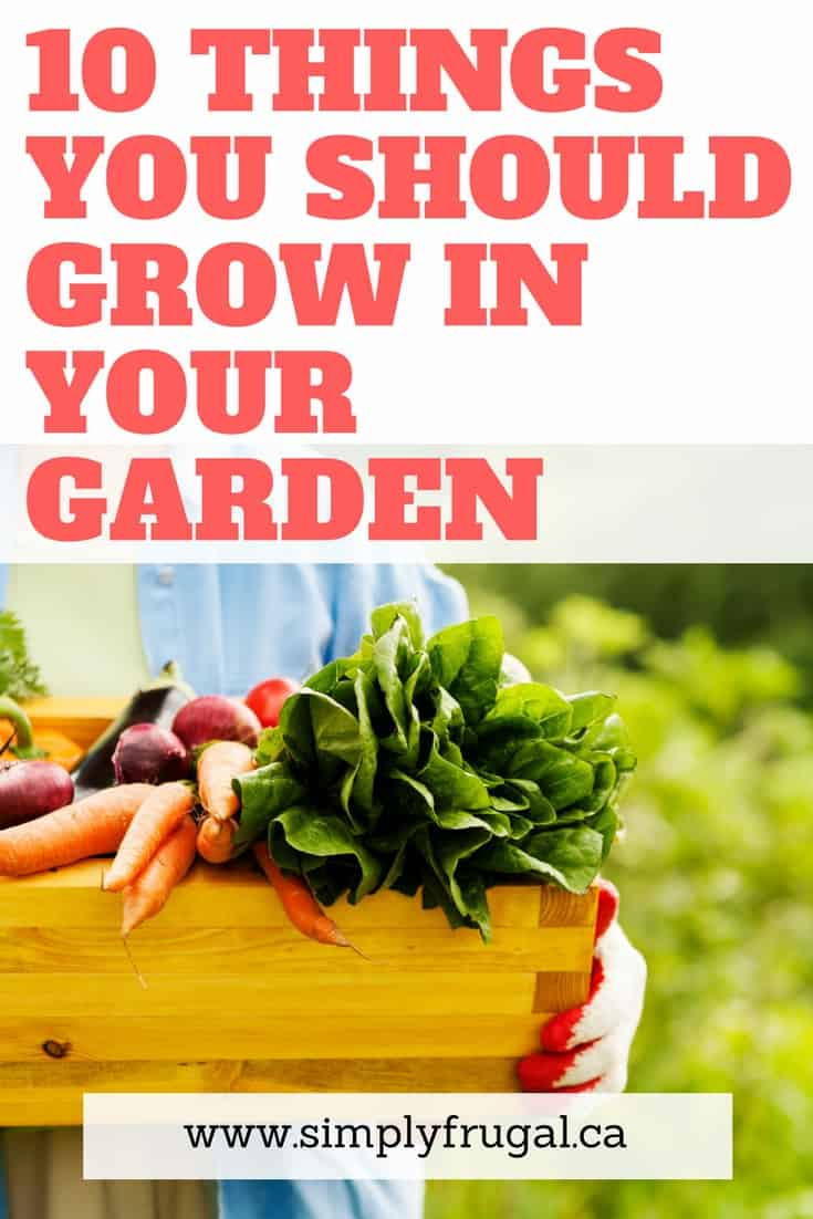 I love this list of 10 things you should grow in your garden this year! #gardening #vegetablegardening