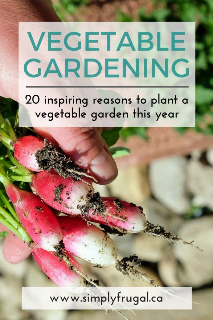 20 inspiring reasons to plant a vegetable garden this year.