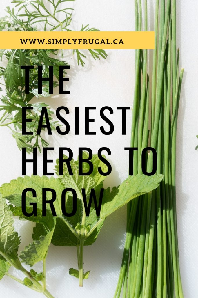 Herbs are great plants to grow in your garden or home. They add flavor to food and leave your home smelling great. Growing your own herbs can be a bit stressful for new gardeners but the truth is some herbs are so easy to grow they make the perfect plants for beginner and not so green thumb gardeners. These are some of the easiest herbs to grow.