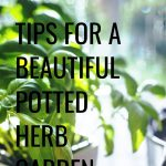 Tips for a beautiful potted herb garden