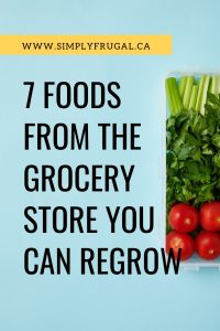 Did you know that many of the scraps from foods you purchase on a regular basis from the grocery store can be regrown in your very own kitchen? Instead of throwing away food scraps, you can start thinking differently about them! Here are 7 foods from the grocery store that you can regrow in the comfort of your home.