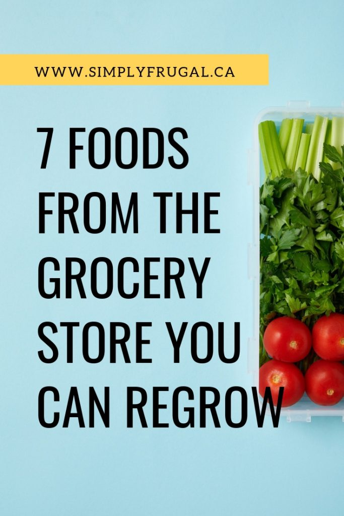 7 Foods From The Grocery Store You Can Regrow