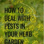 A beautiful herb garden is a great addition to your home but can be difficult if pests find your garden a good home to live in. With a little planning and maintenance, you can protect your garden and help it thrive. Here are 5 tips to help you out.