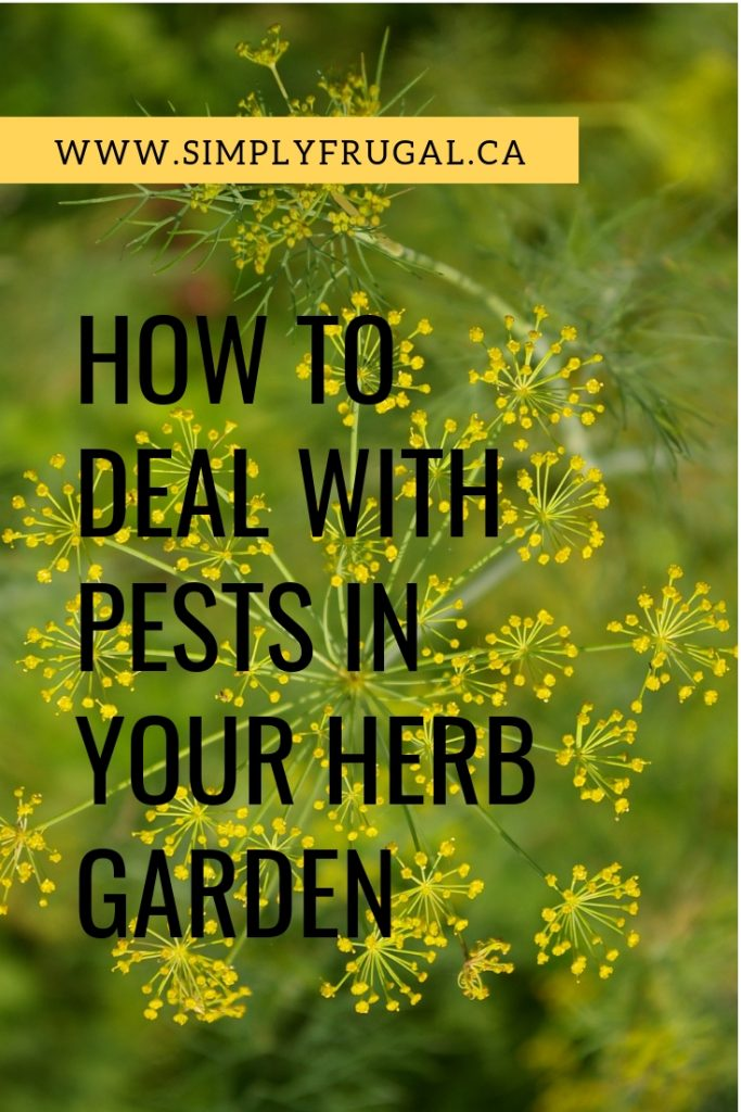 How to deal with pests in your herb garden