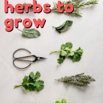 Growing your own herbs can be a bit stressful for new gardeners but the truth is, some herbs are so easy to grow they make the perfect plants for beginners and not so green thumb gardeners. Here are some of the easiest herbs to grow.
